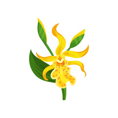 Blooming Canna lily with yellow petals and green leaf. Gorgeous tropical flower. Flat vector element for botanical book or poster