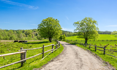 Aluminium Prints Lime green Countryside landscape with rural road and blue sky