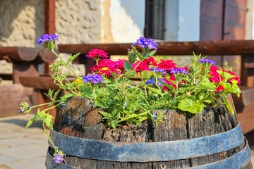 Old rustic wine barrel with flowers. Wine background in Europe. Czech Republic, South Moravia