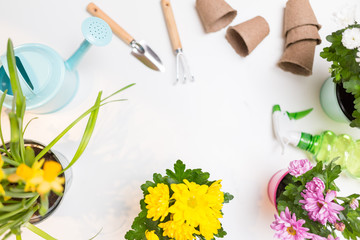 Photo of flowers in pots, watering cans, shovel, rake on empty white background.