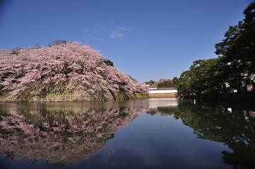 彦根城と桜と逆さ桜 青空のものとの彦根城の桜とお堀の逆さ桜