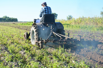 Farmer on old handmade tractor plowing on potatoes field.