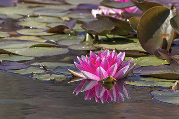 flower above the water
