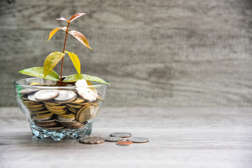 Financial and investment concept, plant growing in saving coins money jar for education, with copy space background