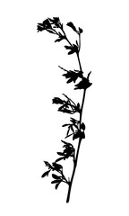 Wild flower silhouette isolated on white.