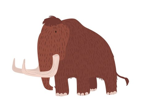 Cute woolly mammoth isolated on white background. Gorgeous extinct animal, giant prehistoric creature, herbivorous mammal with brown wool, trunk and tusks. Flat cartoon colorful vector illustration.