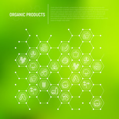 Organic products concept in honeycombs with thin line icons: corn, peas, raw cafe, broccoli, grapes, sprouts, seaweed, watermelon, bananas, fresh juice. Vector illustration for vegetable shop