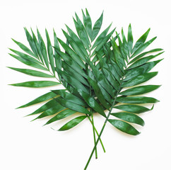 Palm Green Leaves Tropical Exotic Tree Isoalted on White Background. Square Image. Holliday Patern Template