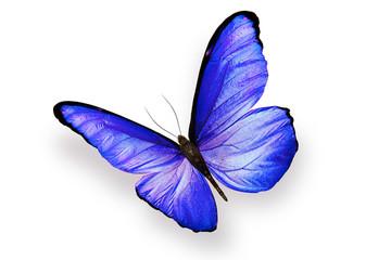 Бабочка с большими голубыми крыльями изолирована на белом фоне