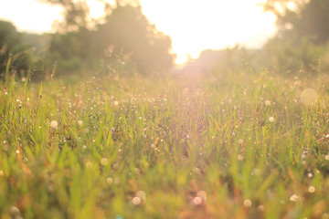 meadows at sunrise