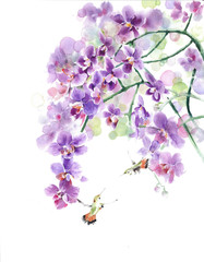 Orchids flowers hummingbirds tropical flowers tropical birds watercolor painting illustration isolated on white background