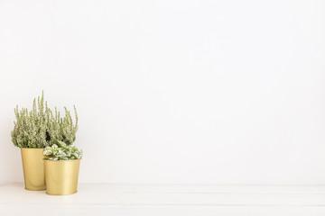 Houseplants in golden pots. Mock up.