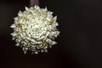 Small white flower with dark background