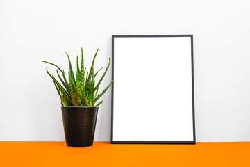 Photo frame and a plant on orange color desk.