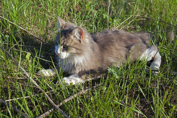 Cat play in the grass