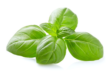 Photo sur Toile Condiment Basil leaves in closeup