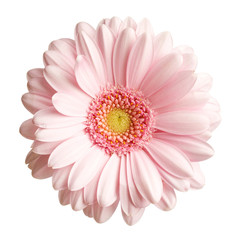 Stores à enrouleur Gerbera Pink gerbera flower isolated on white background