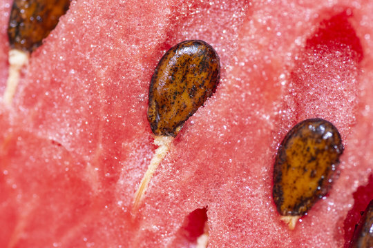 closeup by macro lens of ripe fresh watermelon with seeds, closeup to seeds