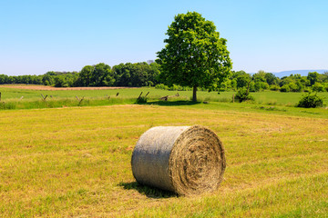 Round Hay Bale in Meadow