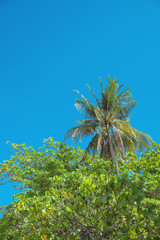 Green, blooming tropical forest - palm tree