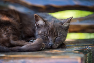 Wall Mural - Cat sleeping on the wooden bench