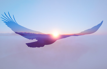 Foto op Plexiglas Eagle Bald eagle on sunset sky background.