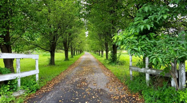 Road to Nowhere/Road to Somewhere; Lush Green Entrance Way with Country White Gate Leading Down a Long, Leaf Filled Path