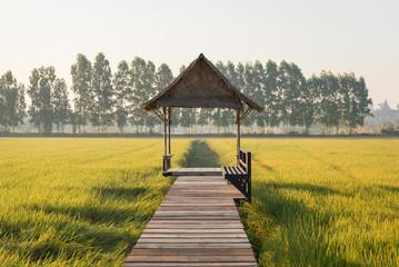 Paddy farm or rice farm at Angthong Thailand