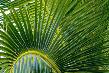 Close up detail of palm fronds on a sunny day