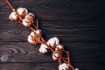 Wooden background with cotton on it