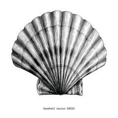 Scallop Seashell vintage clip art