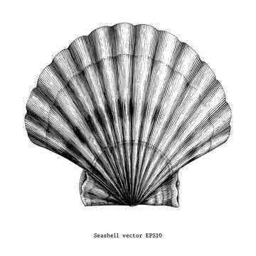 Scallop Seashell vintage clip art