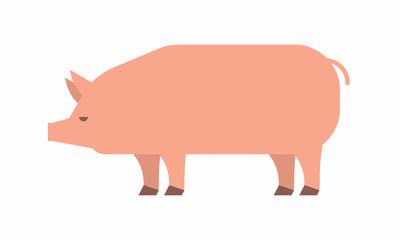 Pig icon. flat style. isolated on white background