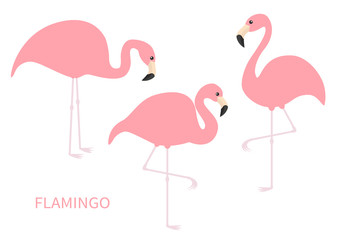 Pink flamingo icon set. Three exotic tropical bird. Zoo animal collection. Cute cartoon character. One leg. Looking on the ground. Decoration element. Flat design. Isolated. White background