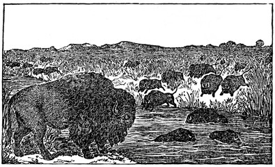 American bisons (from Das Heller-Magazin, February 8, 1834)