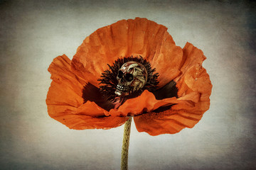 Poppy with skull on textured background, orange