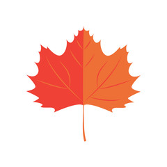Vector Illustration. Maple leaf. Autumn leaf icon