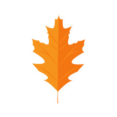 Vector Illustration. Autunm leaf. Red Oak
