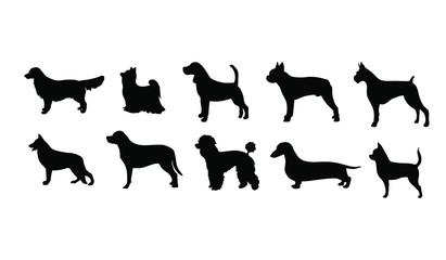 10 Dog Breeds