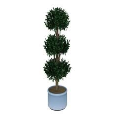 green plant pn pot