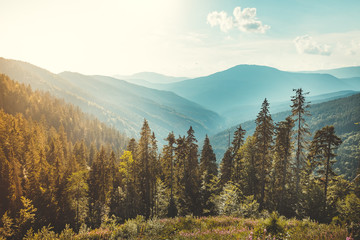 Photo sur Aluminium Europe de l Est Magnificent panoramic view the coniferous forest on the mighty Carpathians Mountains and beautiful blue sky background. Beauty of wild virgin Ukrainian nature. Peacefulness.
