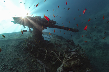 Acrylic Prints Shipwreck antiaircraft gun of ss thistlegorm in backlight
