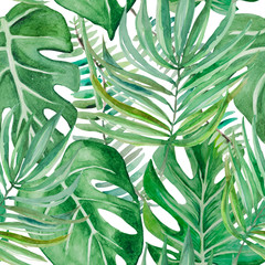A tropical forest insunny day. The huge leaves of palm trees and monsters on a white background,