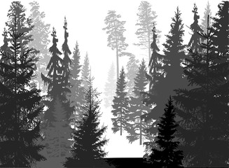 dark grey coniferous forest isolated on white