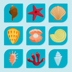 Sea shells marine cartoon clam-shell and ocean starfish coralline vector illustration