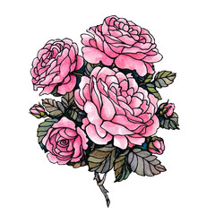 Watercolor drawing of a bunch of roses in pink color