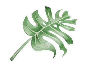 Watercolor, stylized huge sheet of Monstera deliciosa