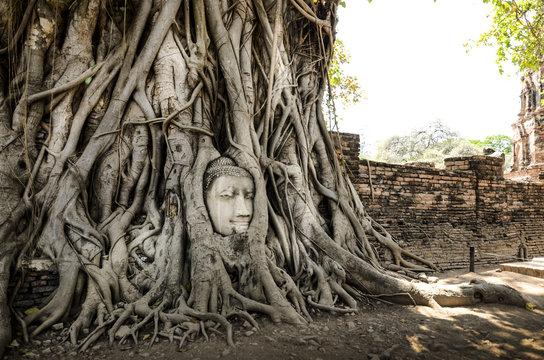 Buddha Head in Tree Roots in Wat Mahathat , ayutthaya Thailand