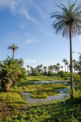Beautiful tropical wetlands with palm trees and soft light against blue sky, Kafountine, Casamance, Sengal, Africa