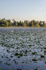 Beautiful lake with water lilies and palms at coast of Casamance, Kafountine, Senegal, Africa